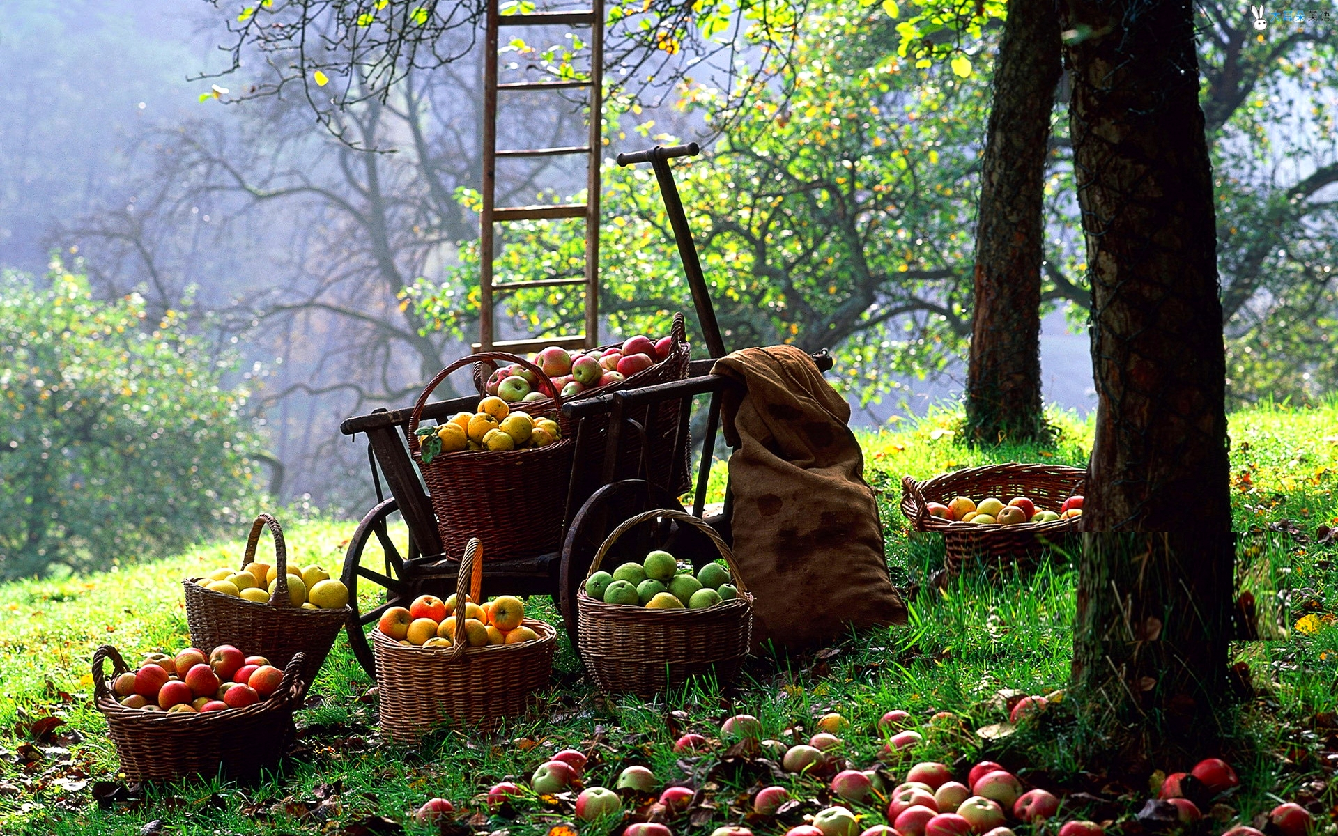 Apple Harvest Weekend